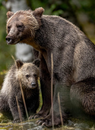 rab-reiseagenturbrandner-kanada-flyin-bären