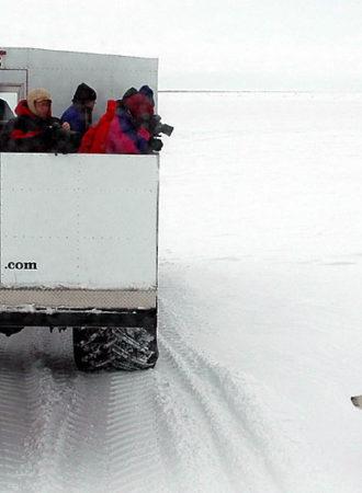 rab-reiseagenturbrandner-kanada-ostkanada-Tundra Buggy