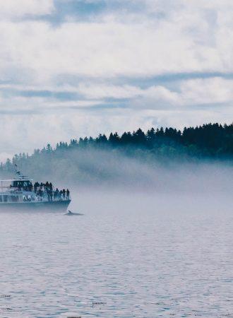 rab-reiseagenturbrandner-kanada-walbeobachtung