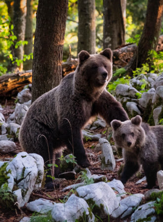 rab-reiseagenturbrandner-kanada-wildnis-bären
