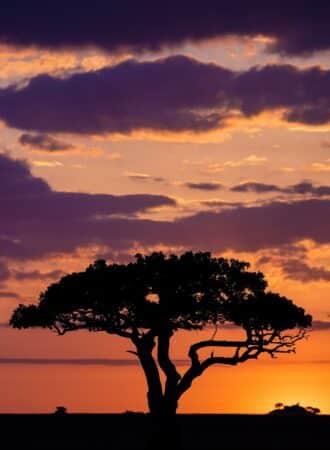 tansania-fotoreise-sonnenuntergang-safari-baum-schatten